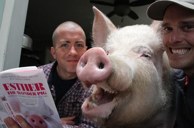 Canadenses mantêm porca de 300 kg como animal de estimação