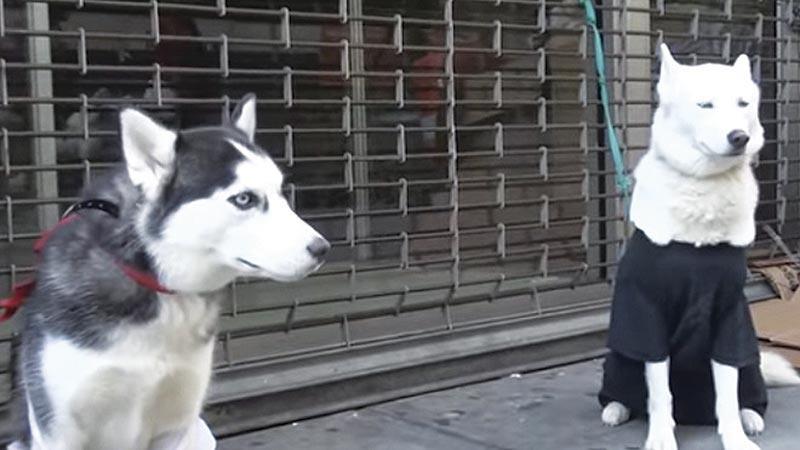 Jovens realizam experimento social para testar a reação das pesoas ao abandono de animais