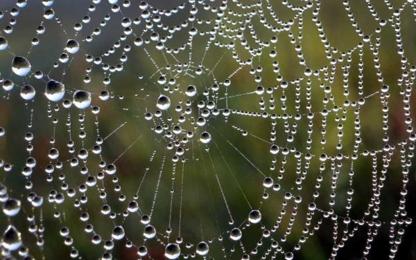 Cientistas querem usar teia de aranha para reconstruir coração