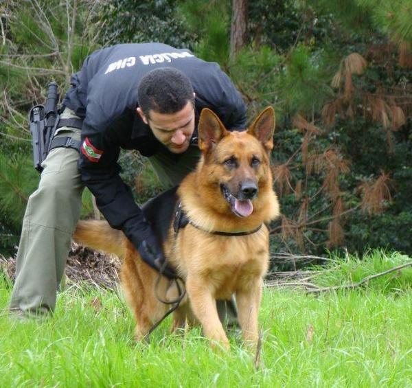 São Lourenço do Oeste – Amizade entre Homem e Cachorro