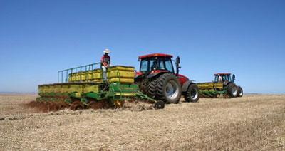 Área de 196 mil hectares de feijão serão plantado