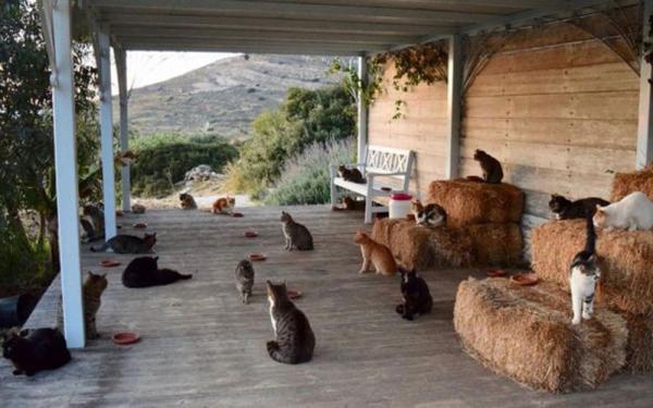 Santuário animal em ilha grega procura amante de gatos para cuidar de seus 55 felinos