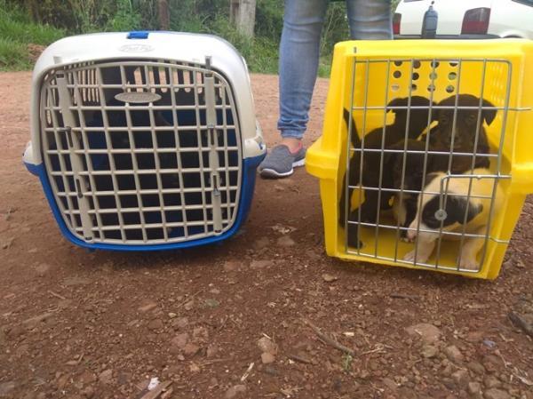 ONG Arca de Noé recolhe cachorra e filhotes abandonados