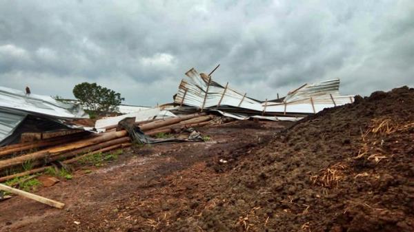 Vento forte causa estragos em Francisco Beltrão