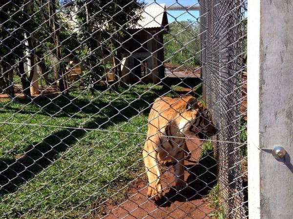 Zoológico que abriga animais vítimas de tráfico e de maus tratos será aberto ao público, em Dois Vizinhos