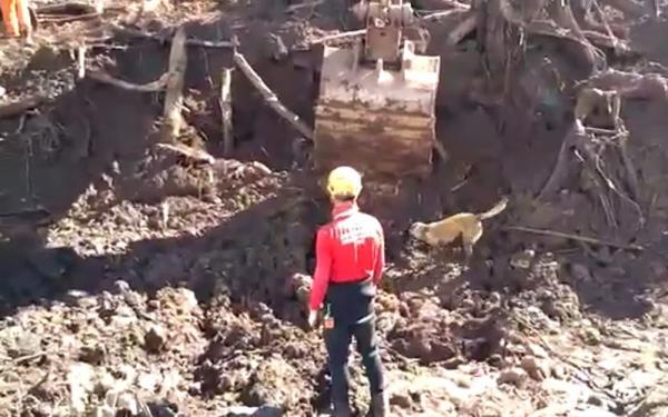 Desastre de Brumadinho: número de mortos identificados vai a 176
