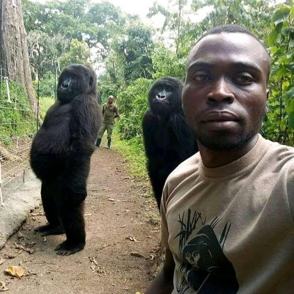 Dois gorilas posam com o guarda que os resgatou quando eram bebês — Foto: Mathieu Shamavi / Reprodução Facebook