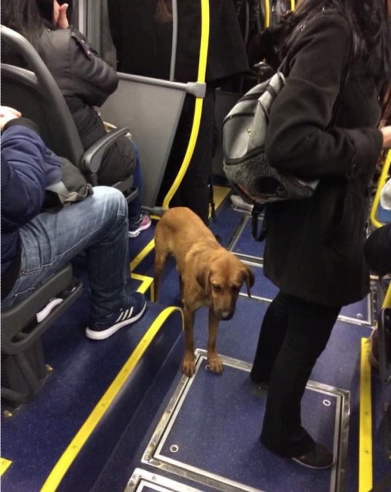 Cachorro fez trajeto de 3 km de ônibus, em Curitiba — Foto: Arquivo pessoal/Diogo Gutierre