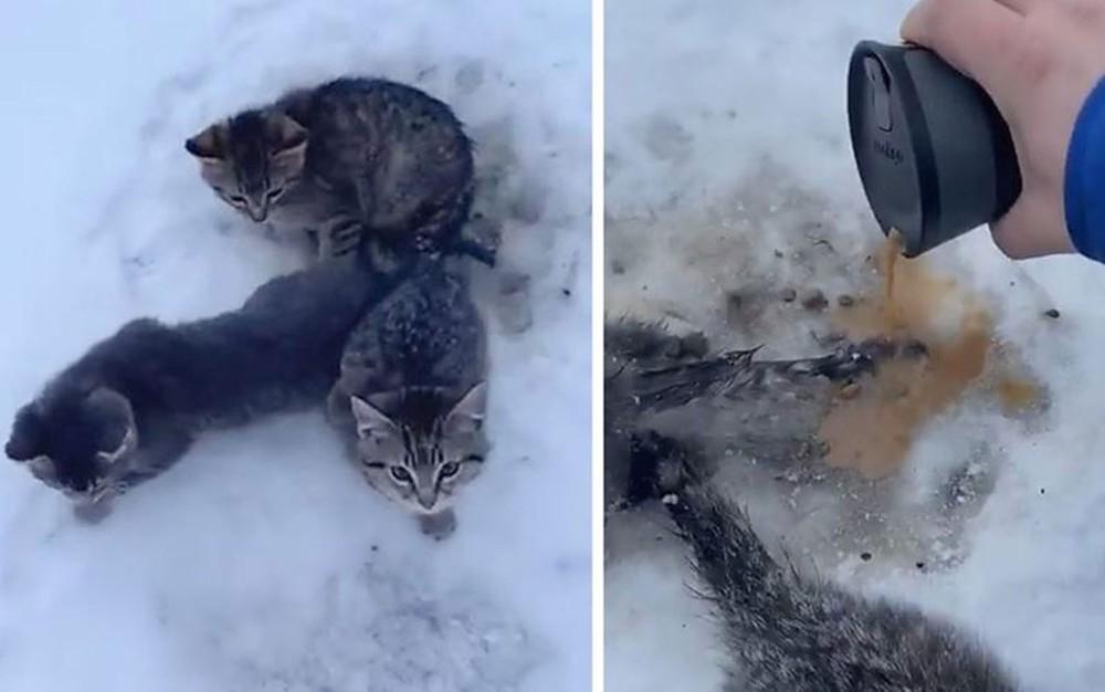Homem usa café para salvar gatinhos presos na neve — Foto: Reprodução/BBC