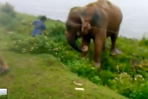 Bêbado escapa por pouco de ataque após provocar elefante no Sri Lanka